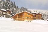 crocus-colchiques-ext-hiver1-159531