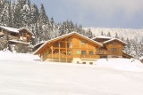 crocus-colchiques-ext-hiver1-278761